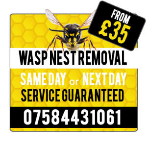 wasp_service