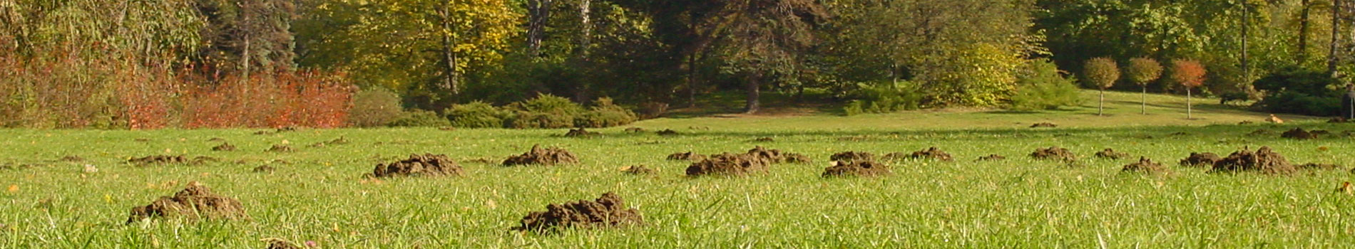 Image of a field of mole hills. A common pest control problem.